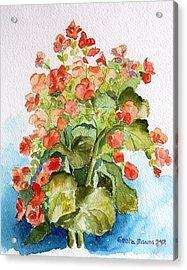 Begonias Still Life Acrylic Print