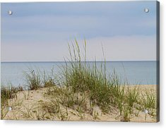 Behind The Dune Grasses 3 Acrylic Print