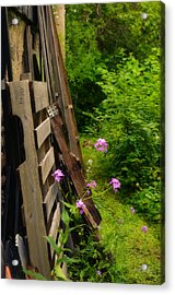 Behind The Old Shed Acrylic Print by Mary Machare