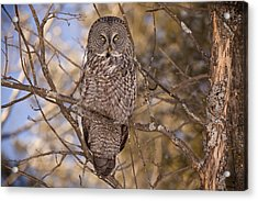 Being Observed Acrylic Print by Eunice Gibb