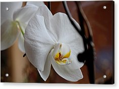 Acrylic Print featuring the photograph Being Pretty by Silke Brubaker