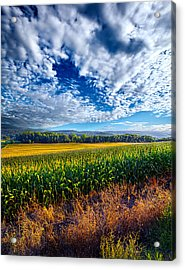 Being There Acrylic Print by Phil Koch