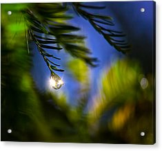 Bejeweled Acrylic Print by Mark Andrew Thomas