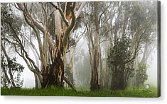 Feeling Misty Acrylic Print