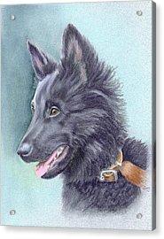 Belgian Sheepdog Puppy Acrylic Print