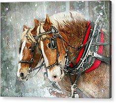 Belgian Snowflakes Acrylic Print