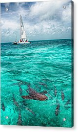 Belize Turquoise Shark N Sail  Acrylic Print
