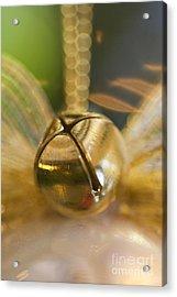 Bell Ornament Acrylic Print by Birgit Tyrrell