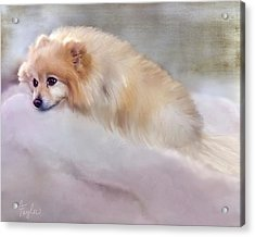 Bella Boo Acrylic Print by Colleen Taylor