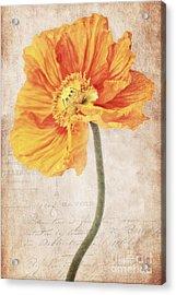 Bella Orange Acrylic Print