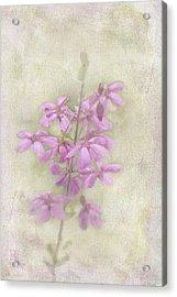 Belle Acrylic Print by Elaine Teague