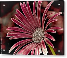 Acrylic Print featuring the photograph Belle Of The Ball by Wallaroo Images