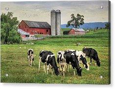 Belleville Cows Acrylic Print by Lori Deiter