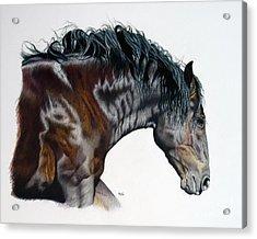 Bellus Equus Acrylic Print