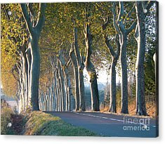 Beloved Plane Trees Acrylic Print by France  Art