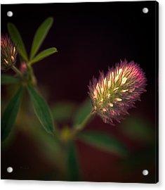 Below The Flower Line Acrylic Print by Bob Orsillo
