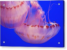 Below The Surface Acrylic Print by Jack Zulli