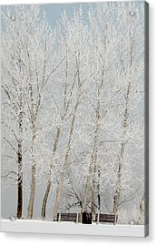 Benches And Hoar Frost Trees Acrylic Print