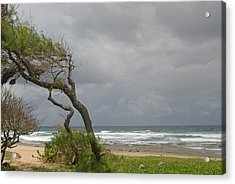 Bending Over Backwards In Barbados Acrylic Print by Willie Harper