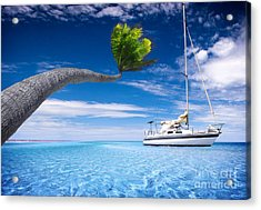 Acrylic Print featuring the photograph Bending Palm Tree by Boon Mee