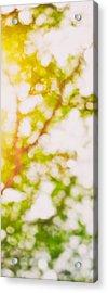 Beneath A Tree  14 5194  Diptych  Set 2 Of 2 Acrylic Print