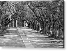 Beneath Live Oaks Bw Acrylic Print by Steve Harrington