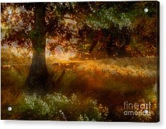 Beneath The Giants - A Tranquil Moments Landscape Acrylic Print by Dan Carmichael