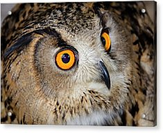 Bengal Eagle Owl Or Indian Eagle Owl Acrylic Print by Nigel Downer