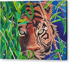 Bengal Eyes Acrylic Print by Molly Williams