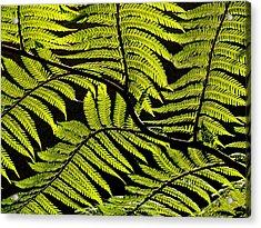 Bent Fern Acrylic Print