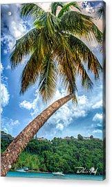 Bent Palm Acrylic Print by William Reek