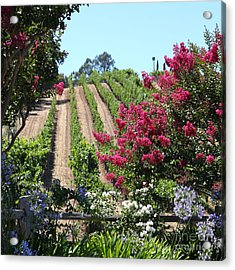 Benziger Winery In The Sonoma California Wine Country 5d24495 Square Acrylic Print