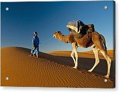 Berber Leading Camel Across Sand Dune Acrylic Print by Ian Cumming
