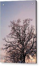 Bergen  Winter Tree Acrylic Print by Hakon Soreide
