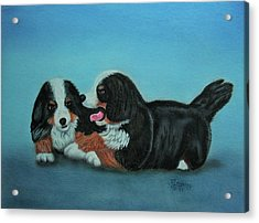 Bernese Mountain Puppies Acrylic Print