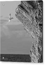 Bermuda Longtail Acrylic Print