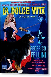 Bernese Mountain Dog Art Canvas Print - La Dolce Vita Movie Poster Acrylic Print