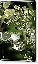 Berries And Blooms In Monochromatic Green Acrylic Print