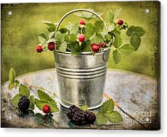 Berries Acrylic Print by Darren Fisher