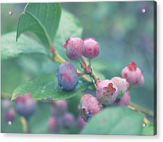 Berries For You Acrylic Print