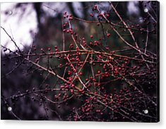 Berries  Acrylic Print by Heather L Wright