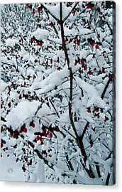Berries In Snow Acrylic Print by Nickaleen Neff