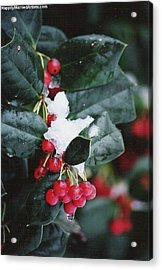 Berries In The Snow Acrylic Print
