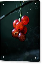 Berries Acrylic Print by Leif Sohlman