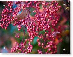 Berries Acrylic Print by Mike Lee