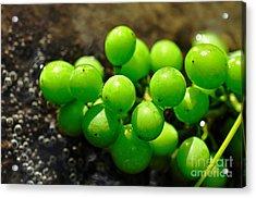 Berries On Water Acrylic Print by Kaye Menner