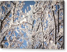 Acrylic Print featuring the photograph Berries With Frost by Kari Yearous