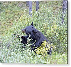 Berry Bear Acrylic Print
