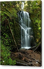 Berry Creek Falls In Big Basin Acrylic Print by Matt Tilghman