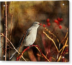 Berry Delighted Acrylic Print by Donna Kennedy